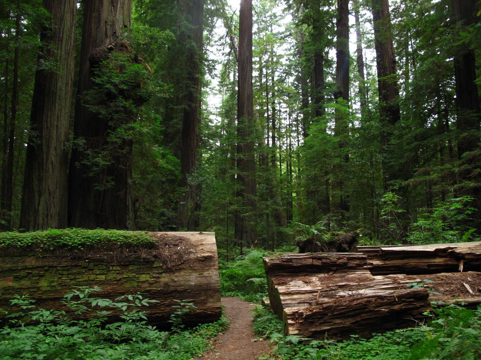 Humboldt Redwoods State Park Cabins Humboldt Redwoods State Park